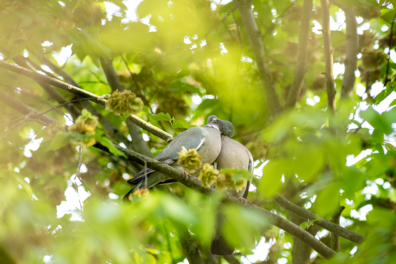 Endcliffe Birding_11.jpg