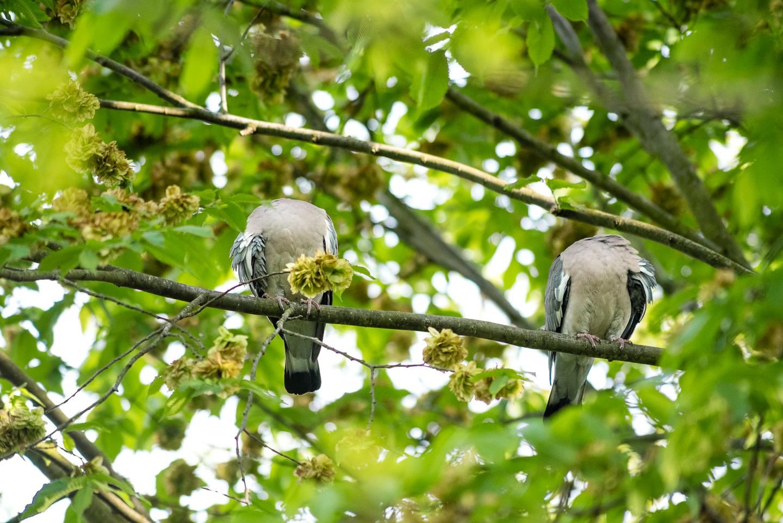 Endcliffe Birding_14.jpg