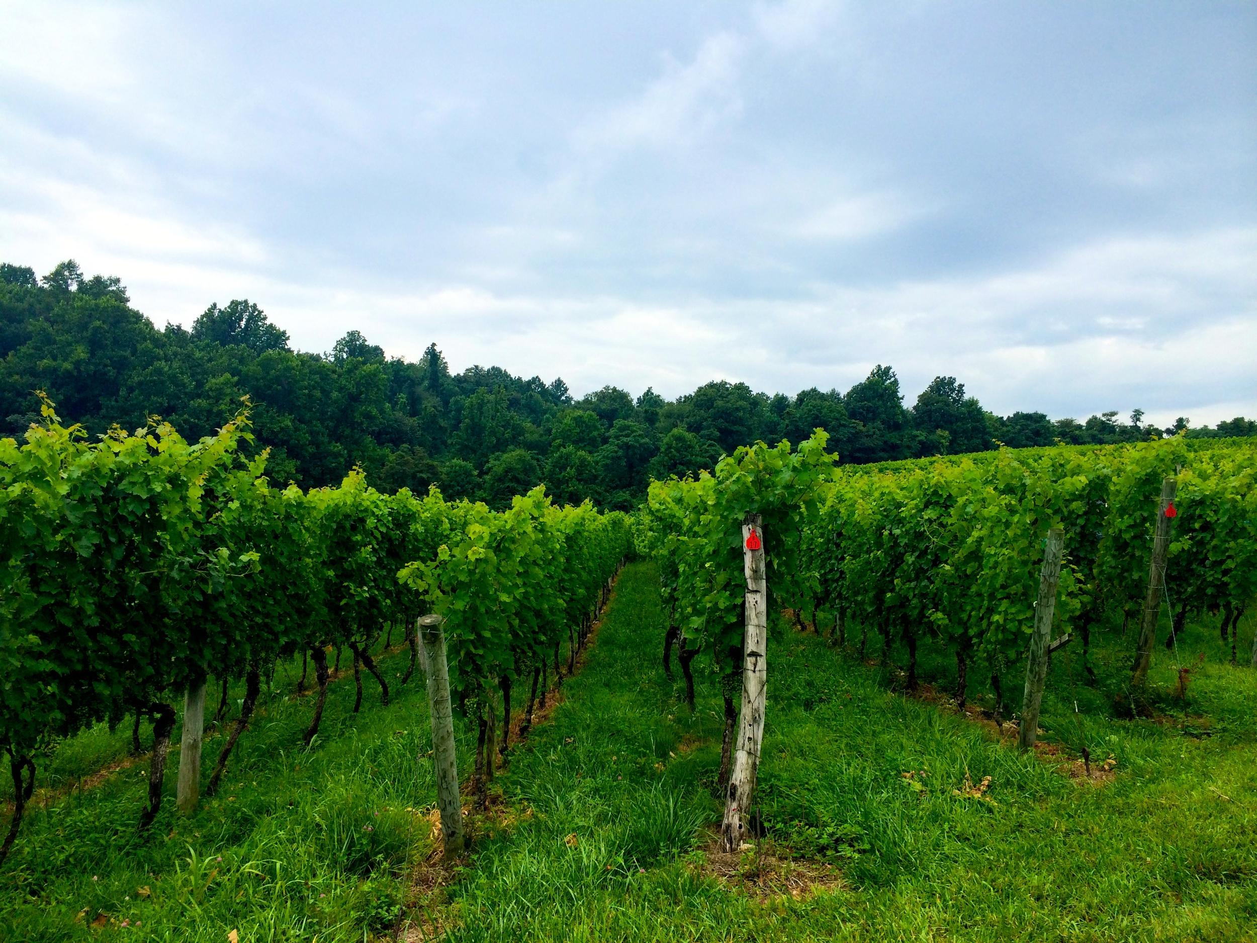 Linden Vineyards