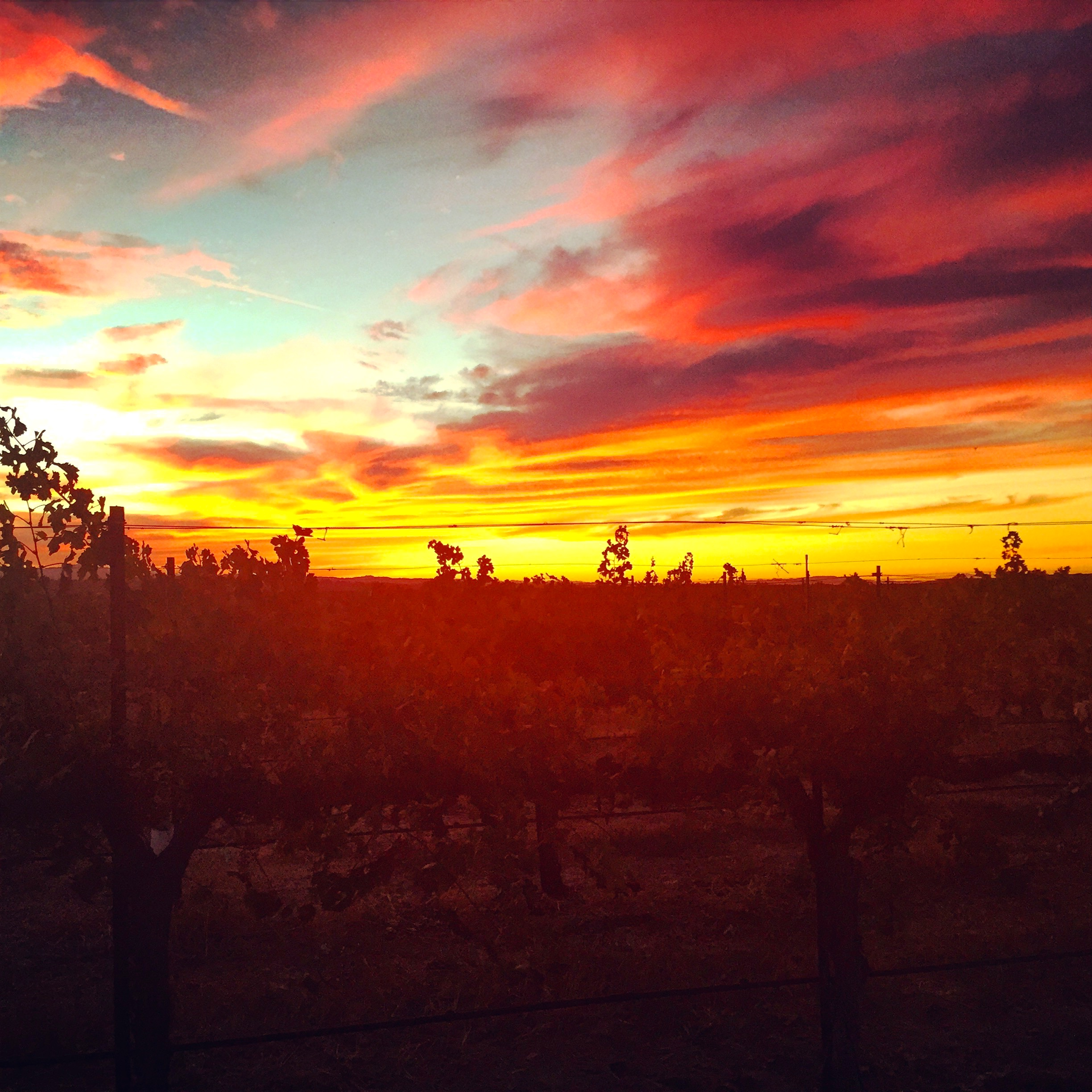 A vineyard sunset in Paso Robles