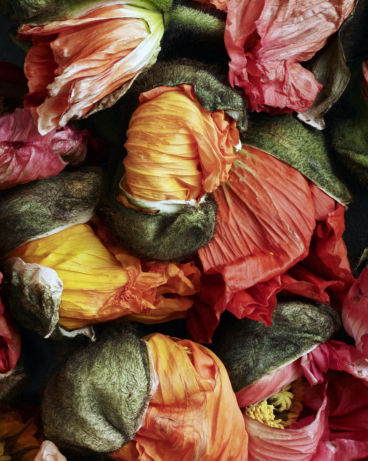 Franco flowers.jpg