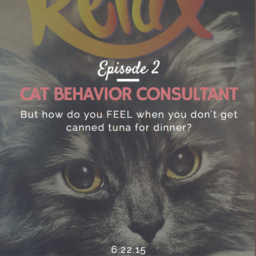 what is a cat behavior consultant and how to become one with Daniel Quagliozzi