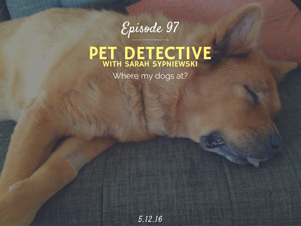 how to become a lost pet specialist pet detective interview with ninja dog concepts