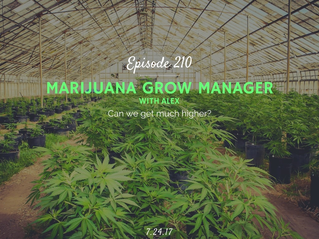 owning and working at a weed grow warehouse podcast interview