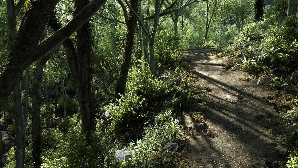 forestPath_1k.jpg