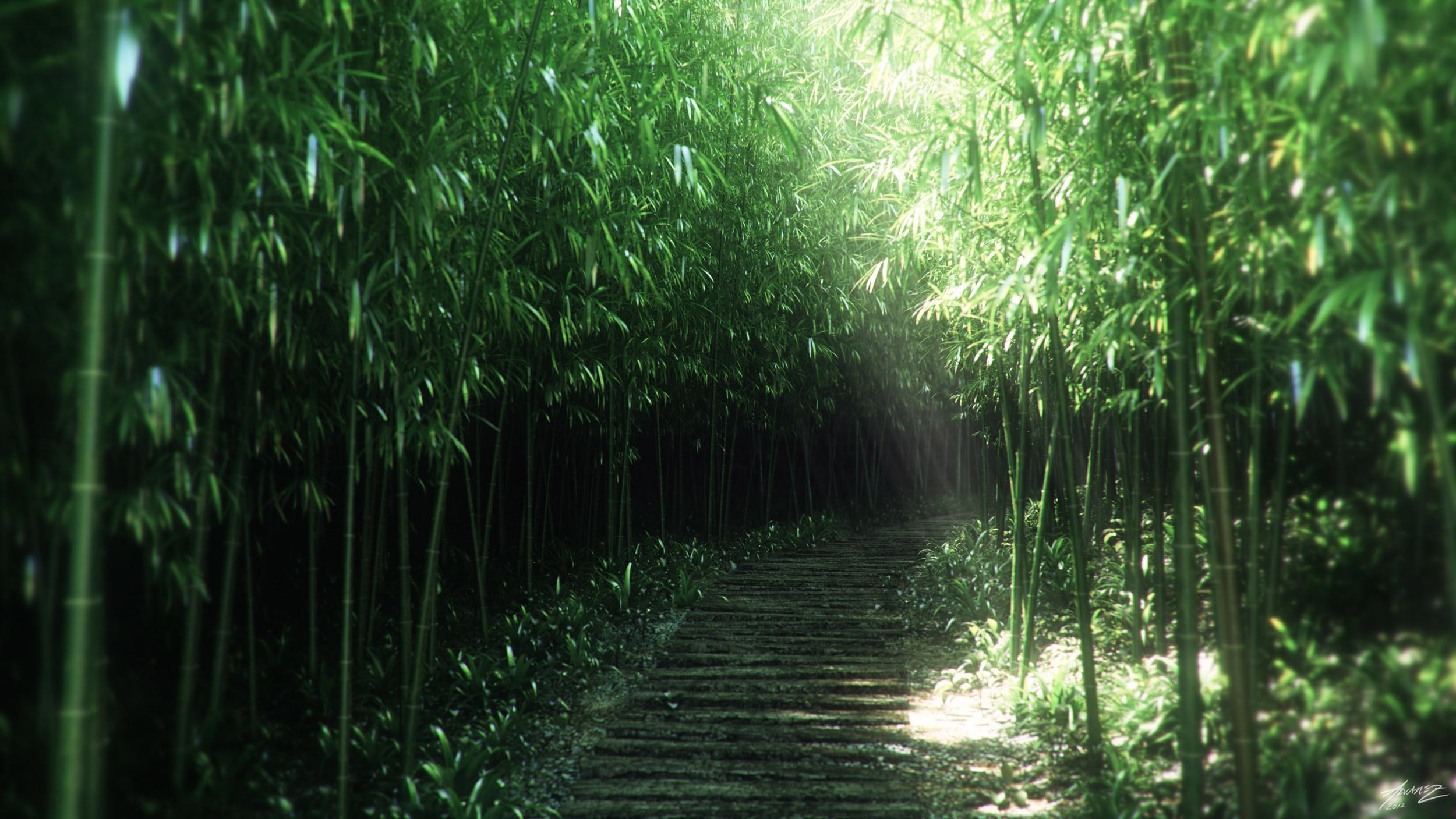 BambooPath_3k.jpg