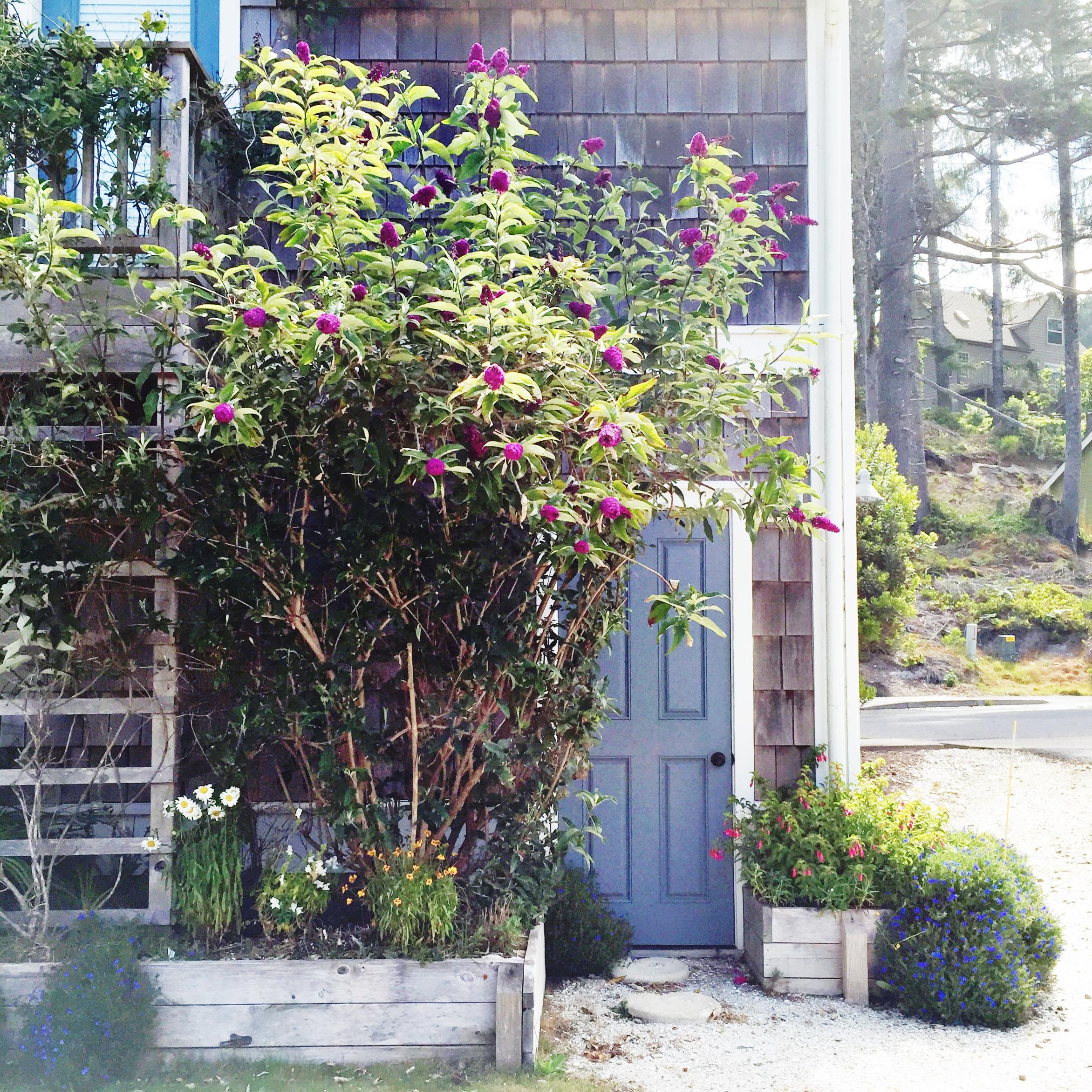 Climbing vines around the carriage house || Studio McGee