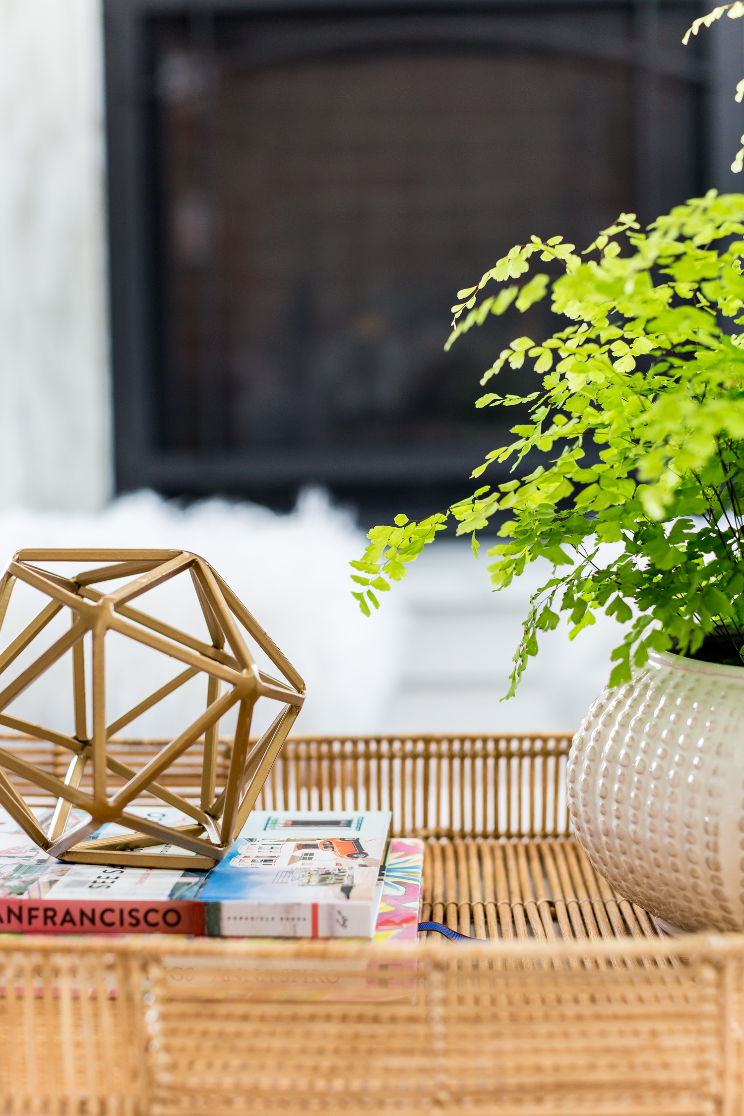 Decorative shape and plant on coffee table