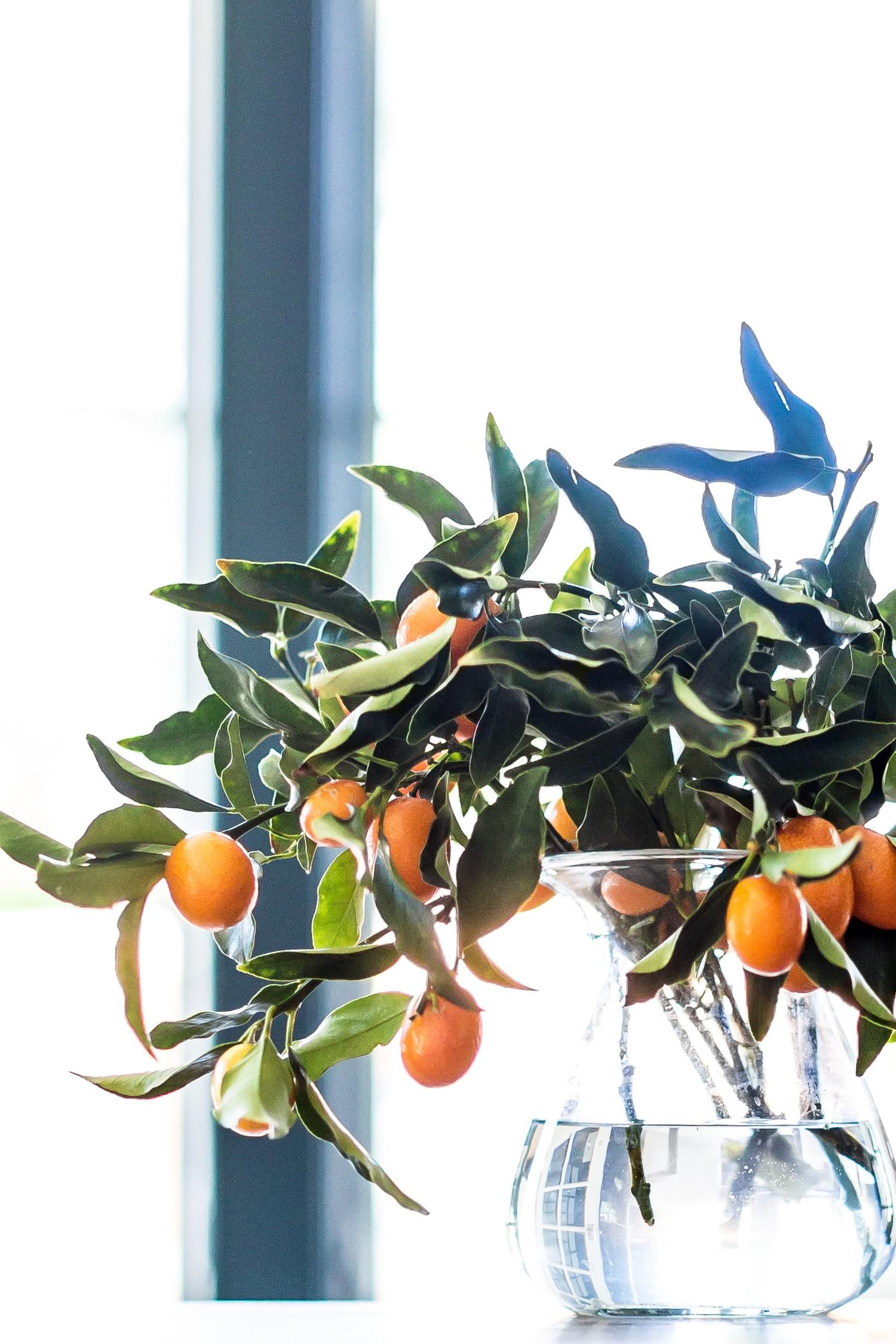 Kumquats+__+Studio+McGee.jpg