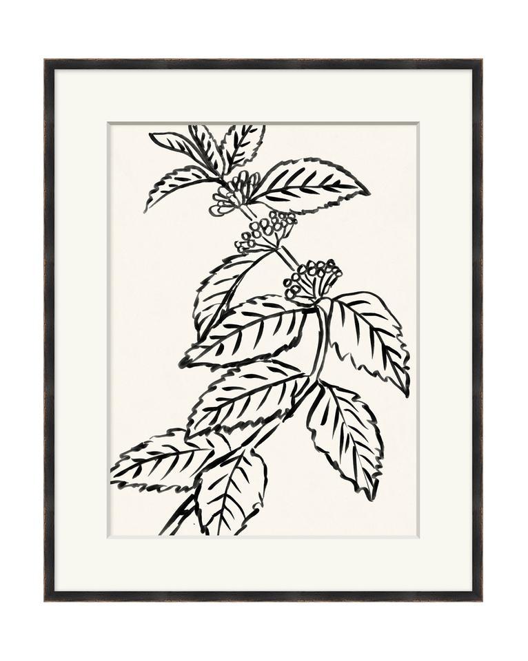 Black_And_White_Botanical_3_1_960x960.jpg