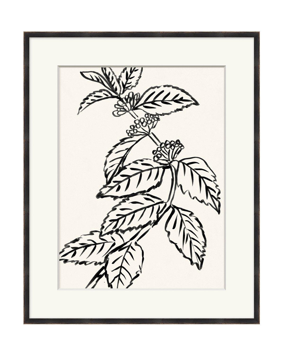 Black_And_White_Botanical_3_1.jpg