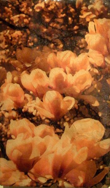 deroux_floral_untitled1.jpg
