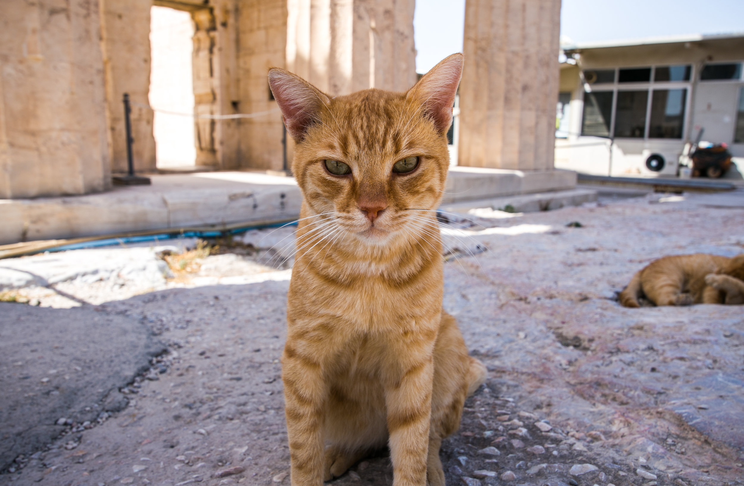 Athens Day 2 - Mike Schwarz_-12.jpg