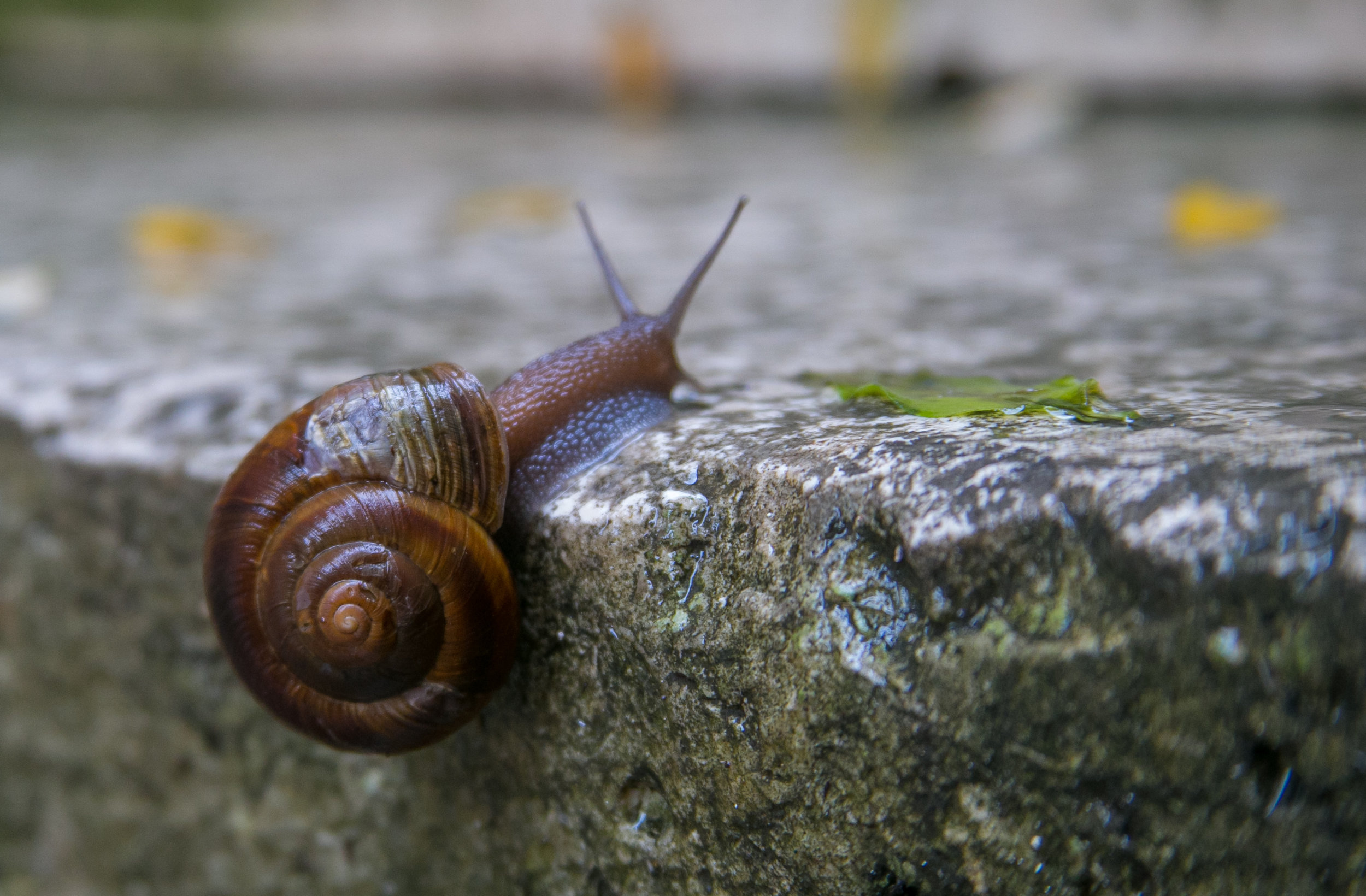 A snail found on the steps after a rain storm.