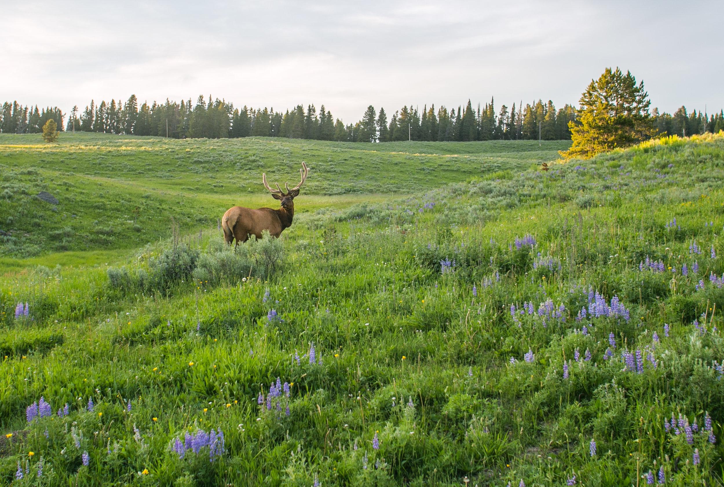 Yellowstone - Mike Schwarz_-10.jpg