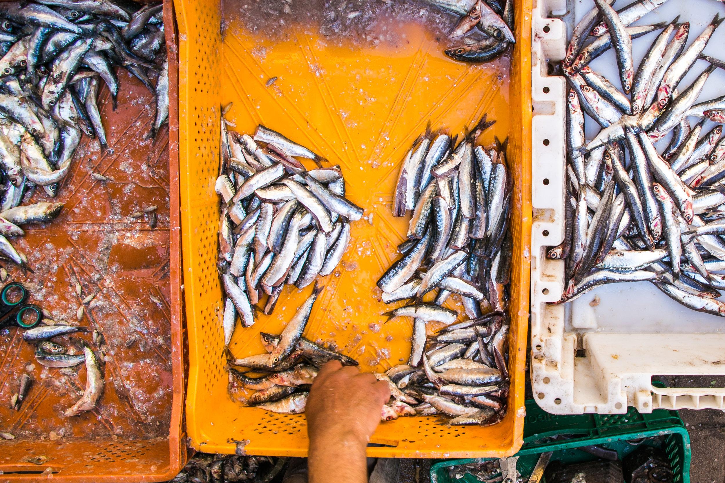Market - Fes, Morocco