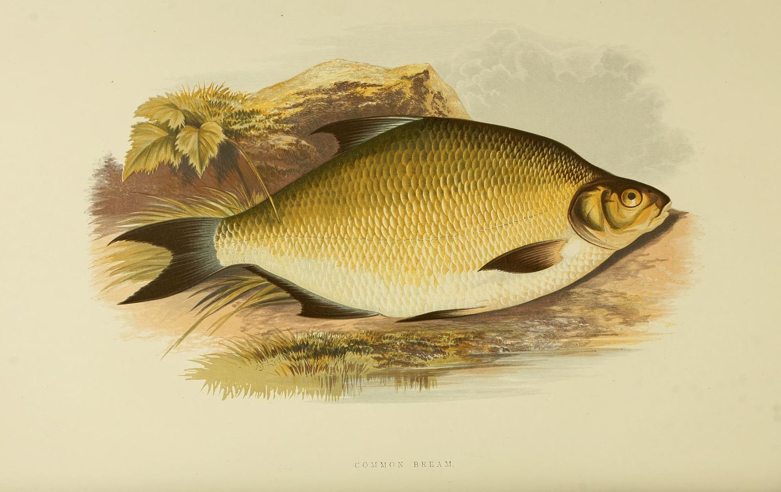 http://www.biodiversitylibrary.org/page/6177650