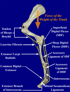UPenn Elastic Limb System