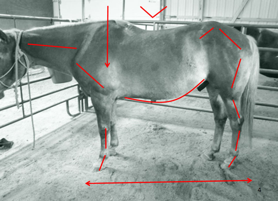Before - Mildly Inverted Roping Horse