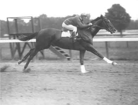 Man o War - a horse hero. Heros require health and vitality to emerge. Please allow great racing to occur again here in America, EVEN better than it has ever been. No drugs - if you are not fit to race you are not fit to race. 6 months per year species appropriate, complex and enriching habitat. First race, age 4, max 3 per year in the first year. 3 months per year off season for every horse.....hmmmm, I wonder what heros we would get out of that set up? Who would want to see and bet on horses of that caliber?  It is ironic that Man o War and Secreteriat, like Barbaro, were ultimately euthanized due to laminitis. I wonder how these horses, both in racing and throughout their lives, would have performed and lived differently under the umbrella of wellness or the health that results from maximizing the benefits of, and working with, native design.