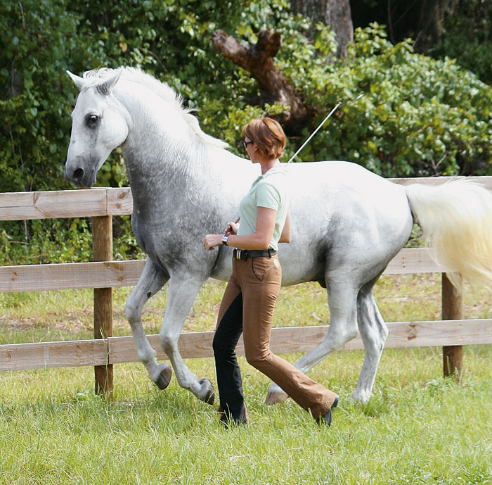 Karen Rohlf and a lucky horse preparing to be ridden with healthy biomechanics