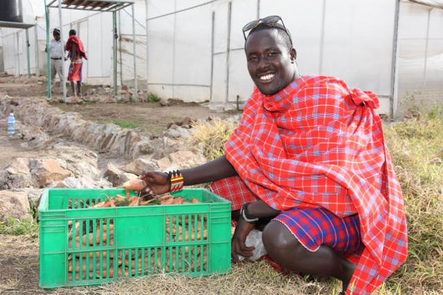 A  Maasai  warrior shows off sweet potatoes, just one of many vegetables grown at Free The Children's 200-acre Oleleshwa Farm in Kenya's South Narok region. The farm was created through FTC's partnership with Saskatchewan-based PotashCorp, which contributes funding, know-how and other support to the initiative.