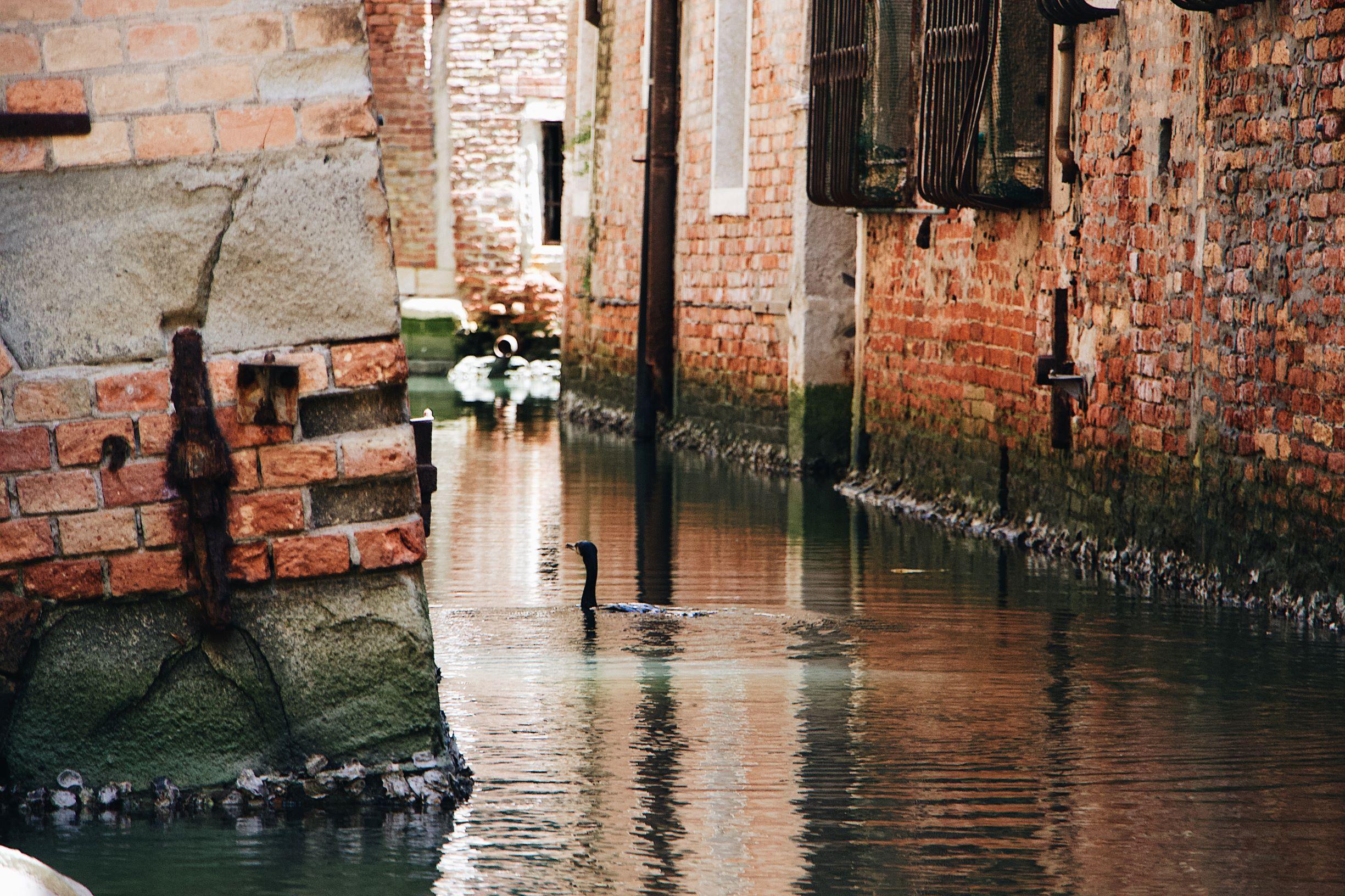 Canard sur l'eau , Venise, 2019 © Mael Balland (Unsplash)