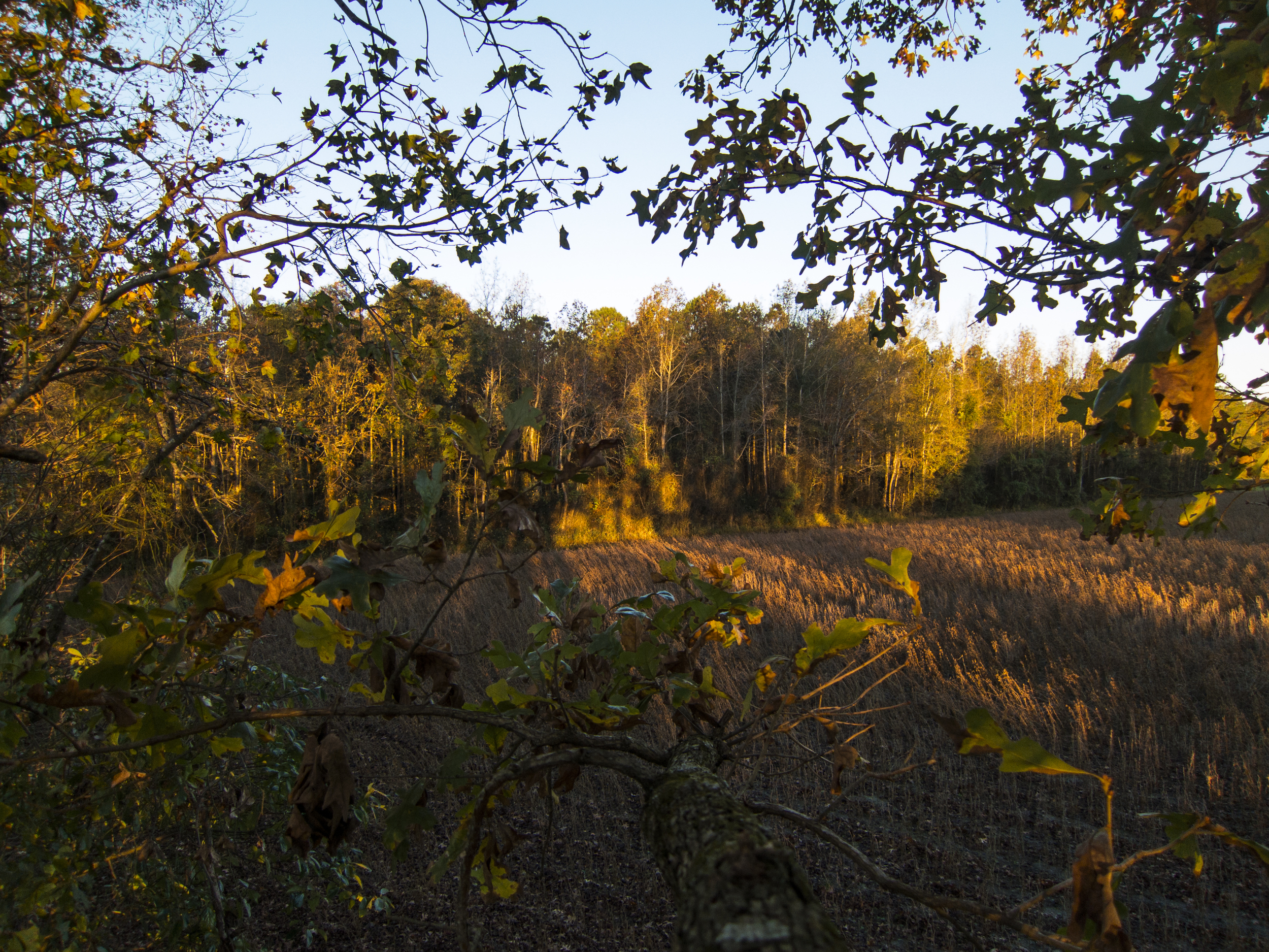 View From The Tree Stand