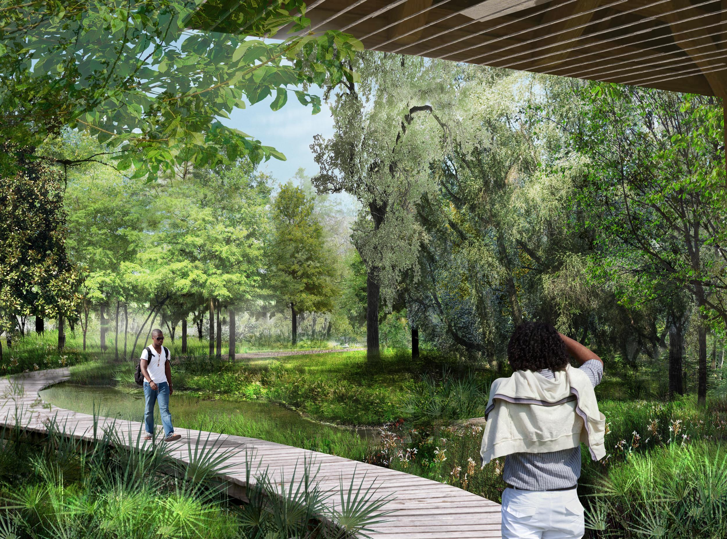 Houston Arboretum and Nature Center bog perspective