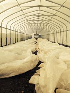 Frost blankets over vegetables