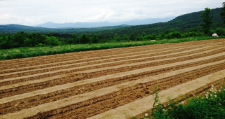 Open Farm Day is July 27, 2014 in Maine. Join us at Pietree from 10am-3pm to celebrate the day!