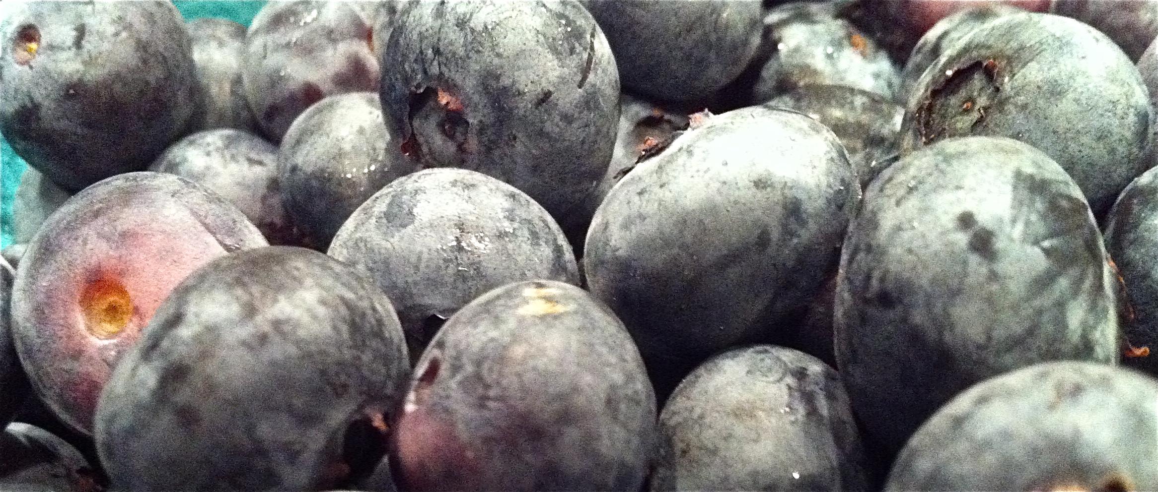 Frosty Blueberries