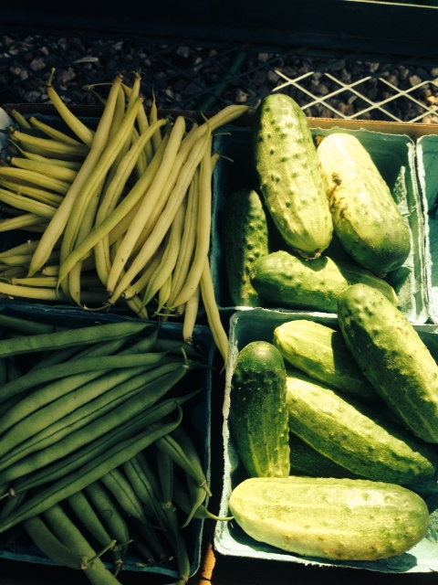 First Harvest of Green & Yellow Beans with Pickling Cucumbers