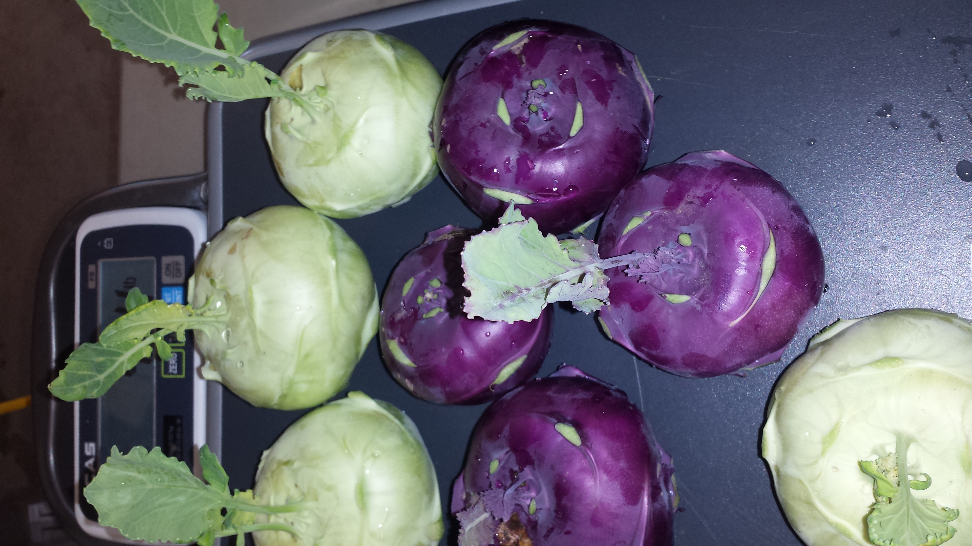 Kohlrabi is Available In the Farmstand this Week