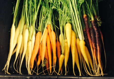 Colorful, Snappy Bunching Carrots