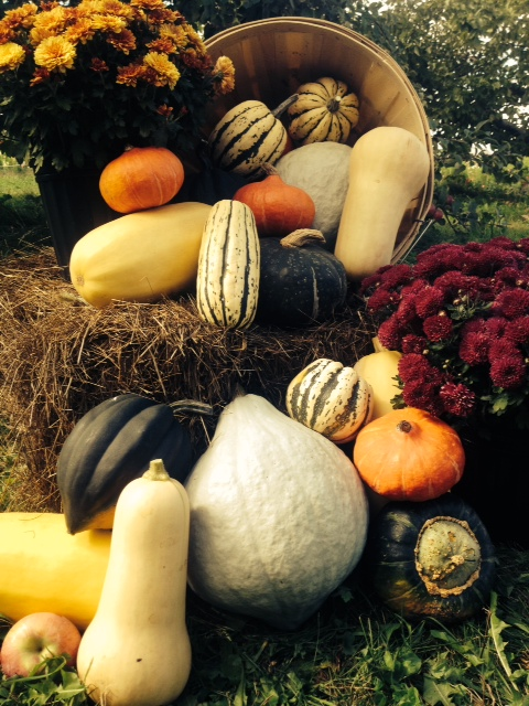 Winter Squash and Mums