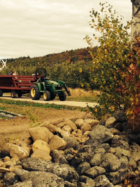 Fall is the perfect time to enjoy a wagon ride through our orchard- the views are amazing!