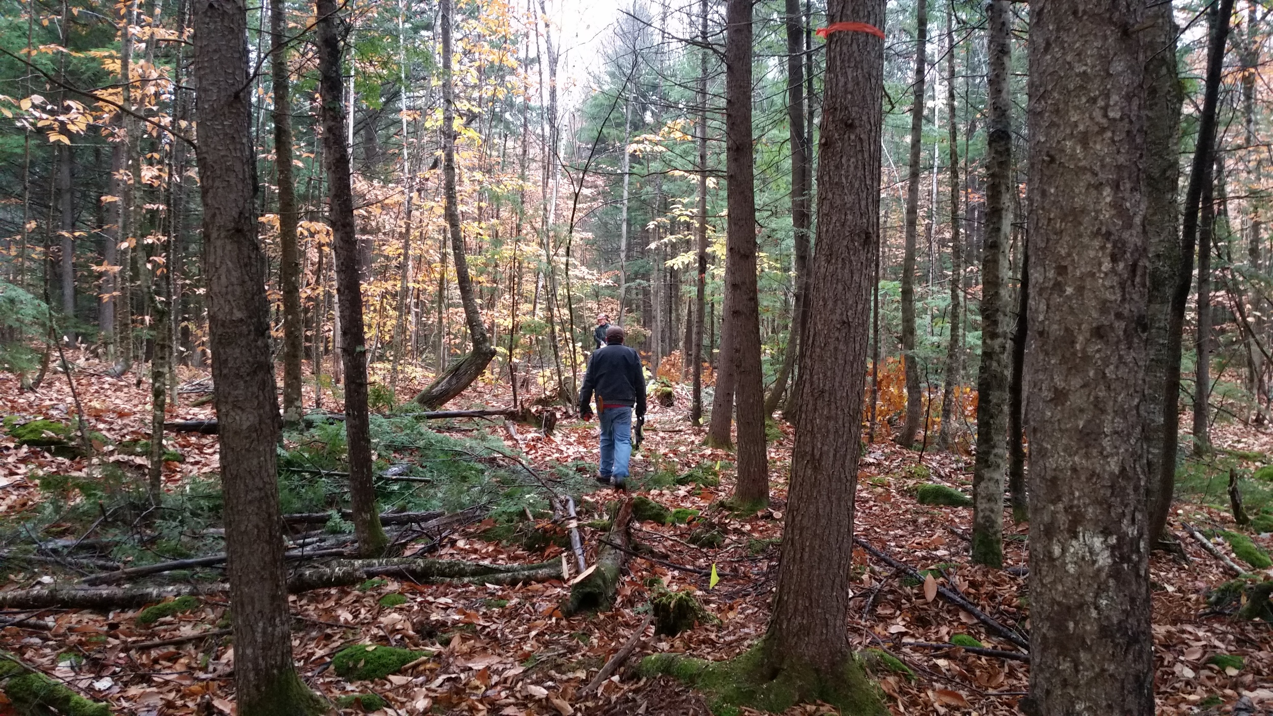 Down at the sugar bush- walking the grounds for ideal transport line paths.