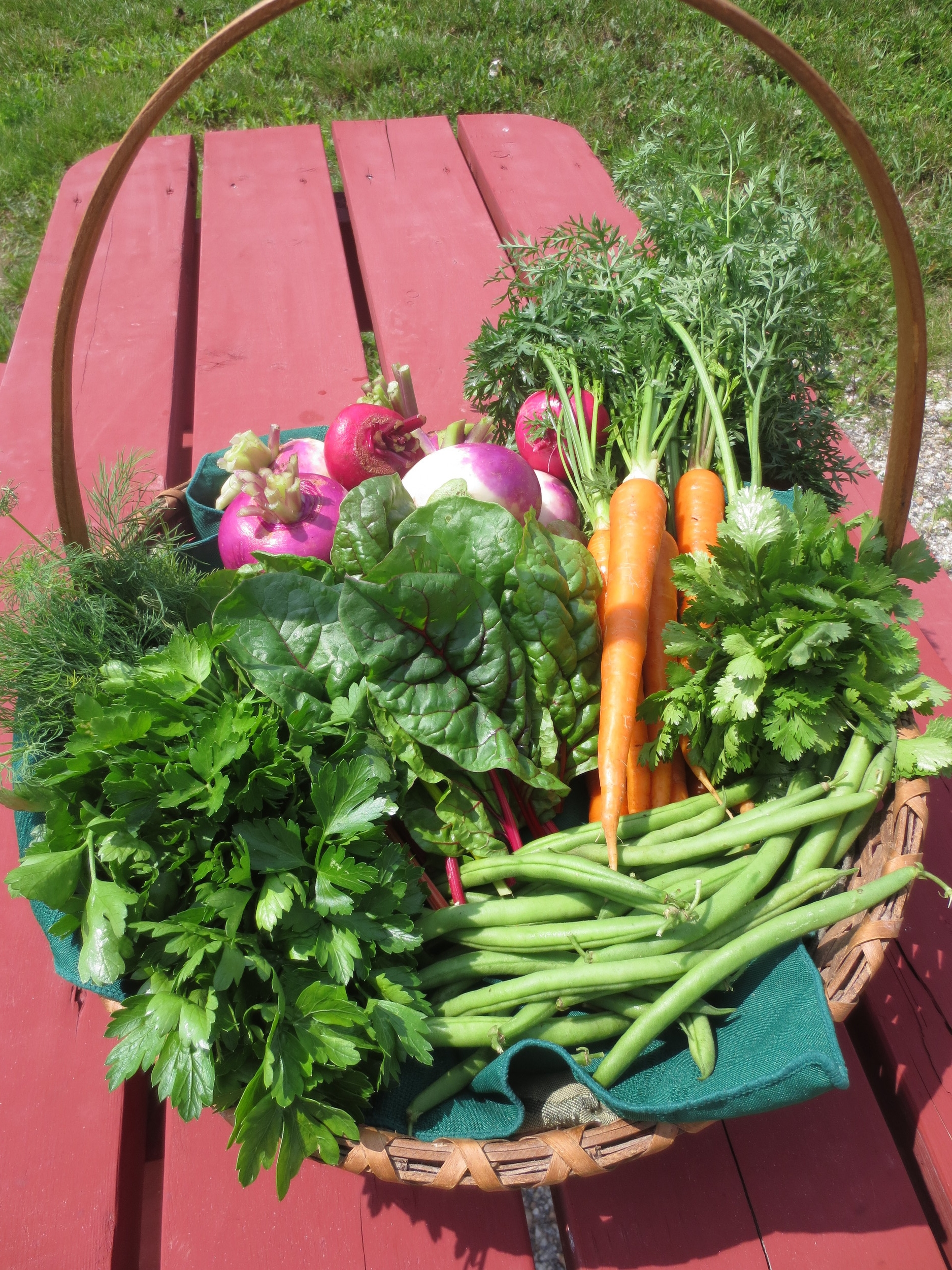 A taste of the produce available this week at the farmstand- carrots, beans, chard, herbs & turnips.