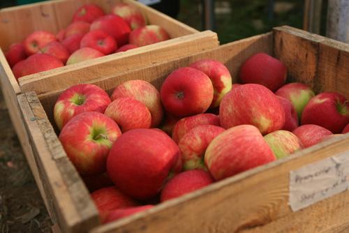 apples in boxes.jpg
