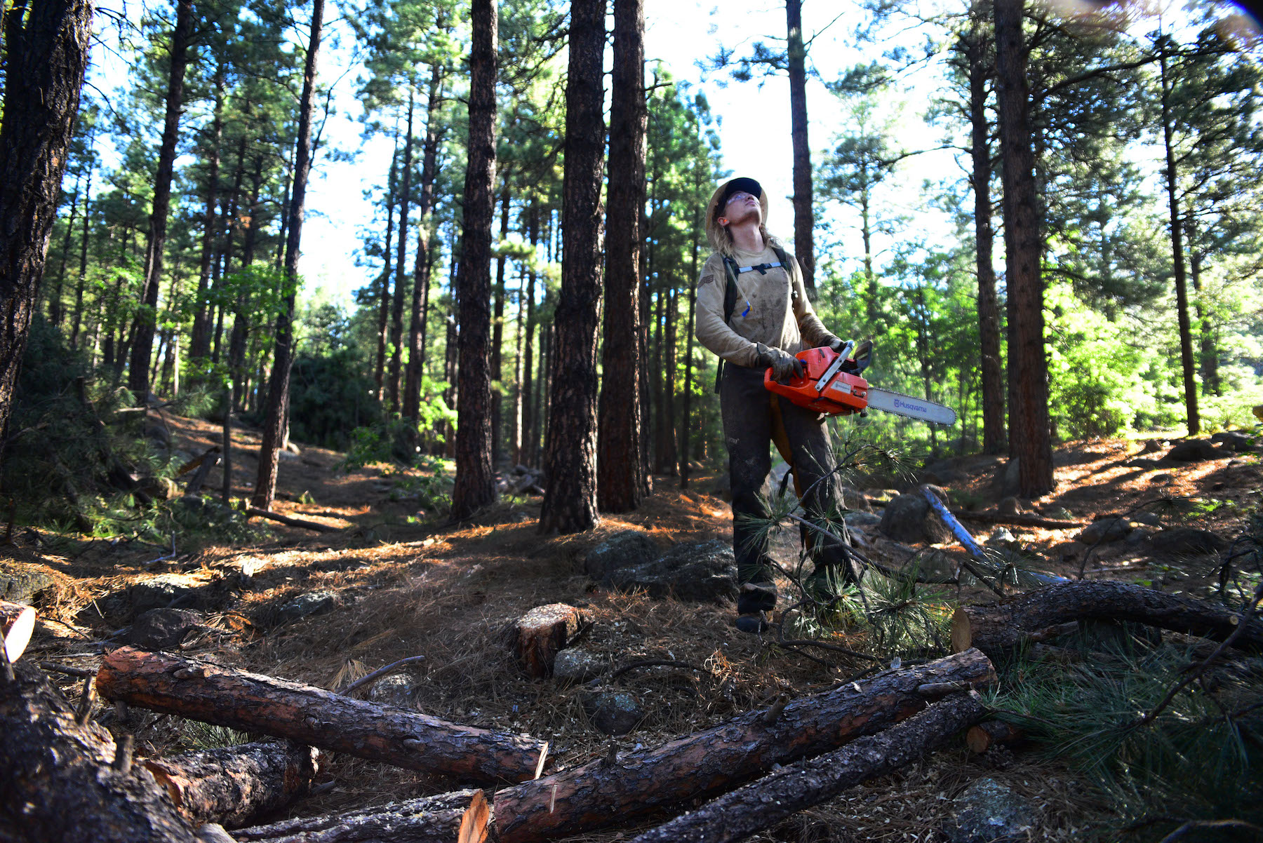 Assistant crew leader, Jake Groth assess which way a tree is leaning before beginning his cut.