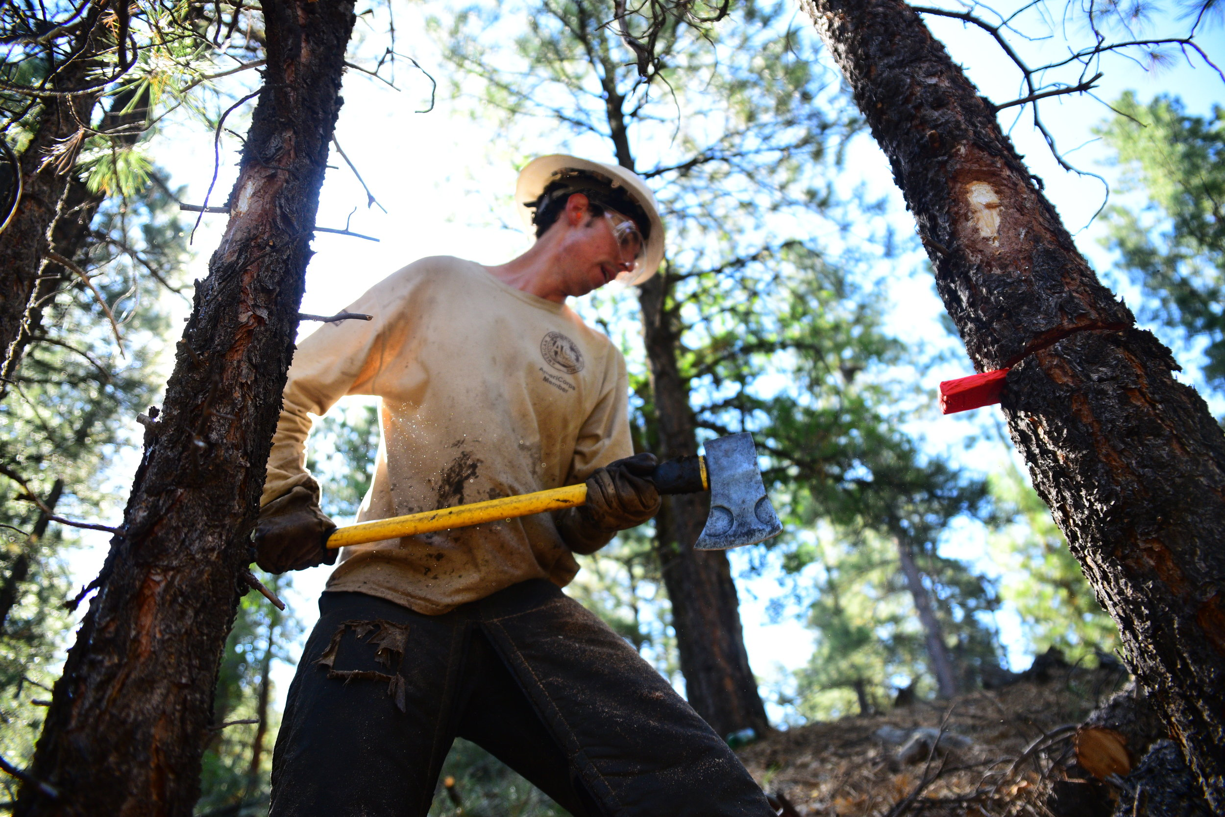 Crew member, Kevin Sperzel uses the end of an axe to pound in a wedge to fell a tree.