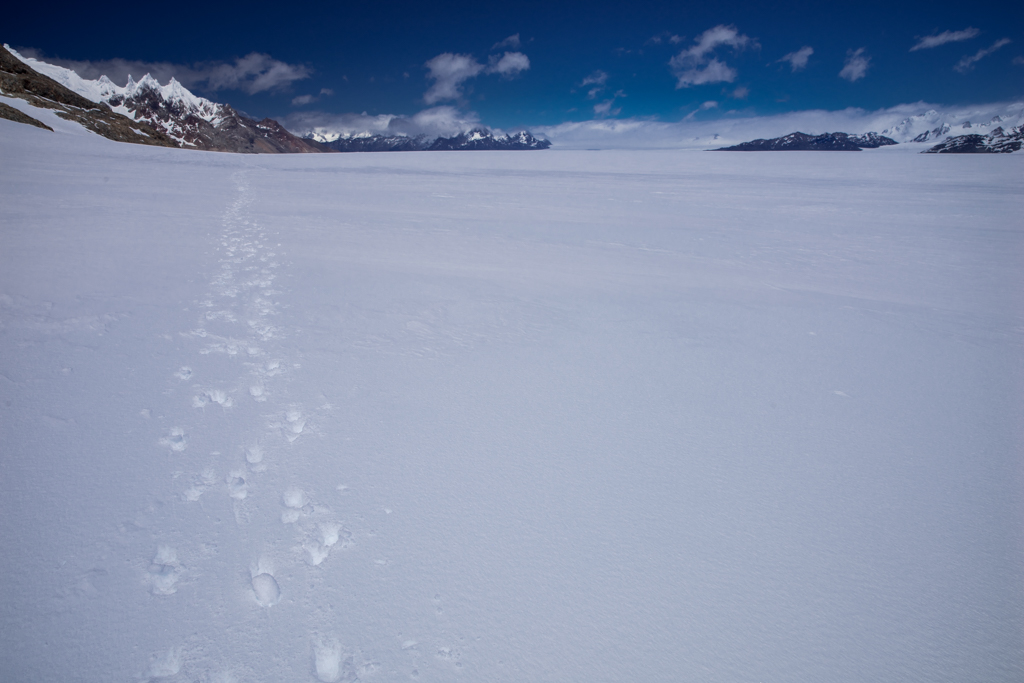Close to the edge of the ice field