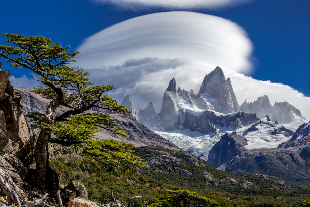 Tree and Cerro Fitzroy with lenticular clouds