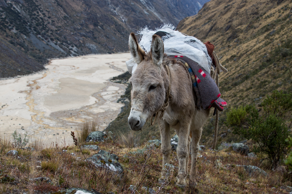 Uphill to Alpamayo base camp south