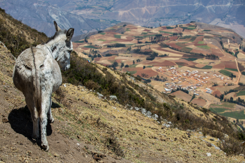 Donkey with view to village