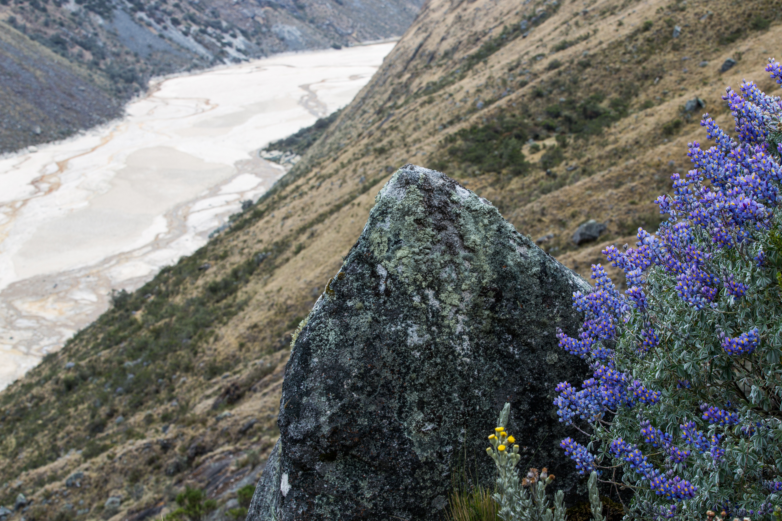 Valley with blue flowers