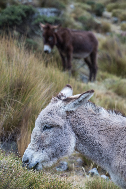 Donkeys at dinner