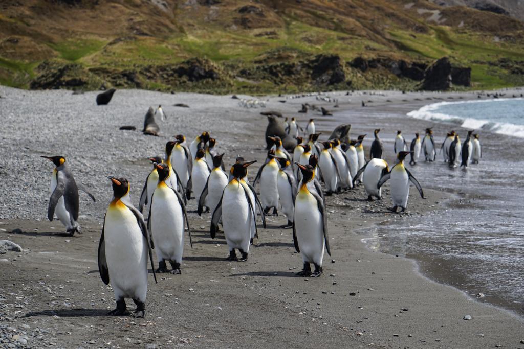 Antarctica_Wildlife_105.jpg