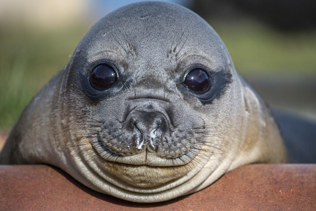 Little cute seal